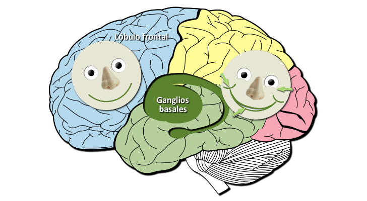 Sonrisas genuinas y fingidas en el cerebro