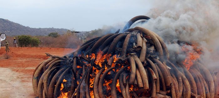 Milestone In Anti-Poaching Campaign As Hong Kong Bans Ivory Trade