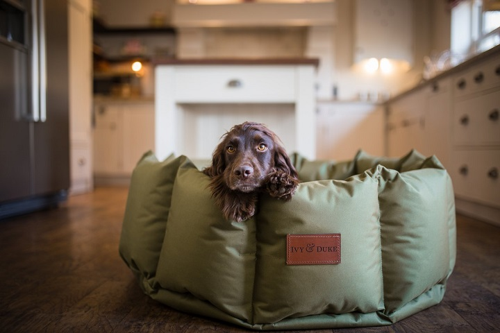 Dog Brands We Love