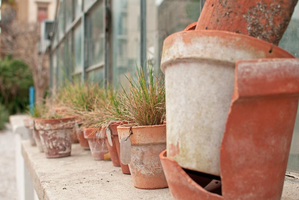 pots de plantes herbacées Au jardin des simples de Florence