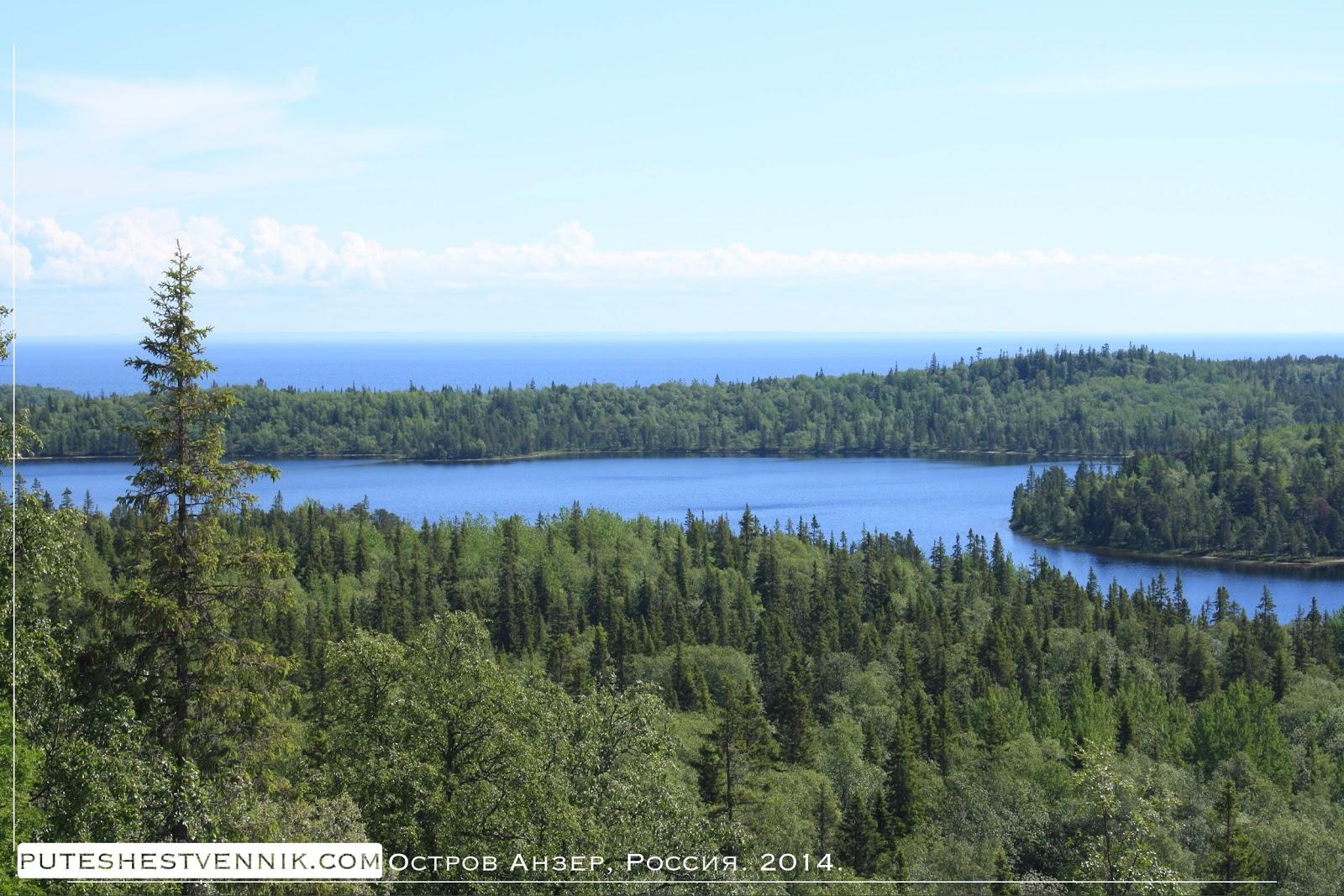 Лес острова Анзер в Белом море