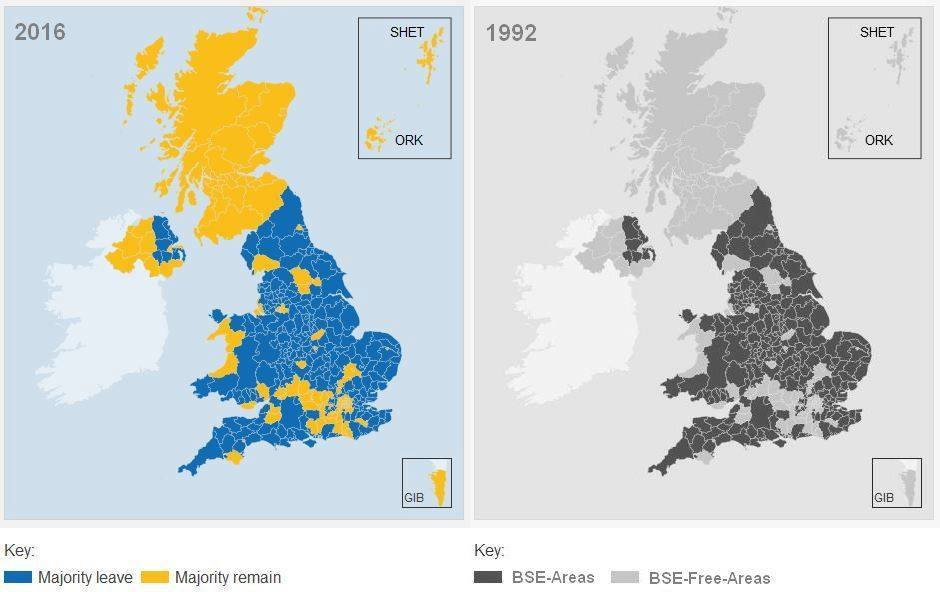 Antibufala: le zone che hanno votato per Brexit sono le stesse della mucca pazza!