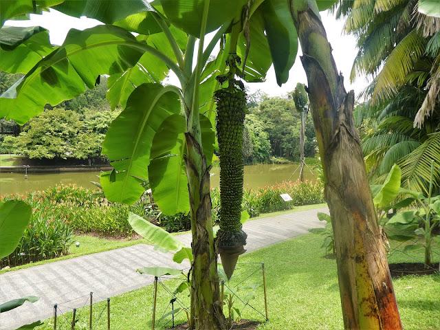 Singapore Botaniska trädgården
