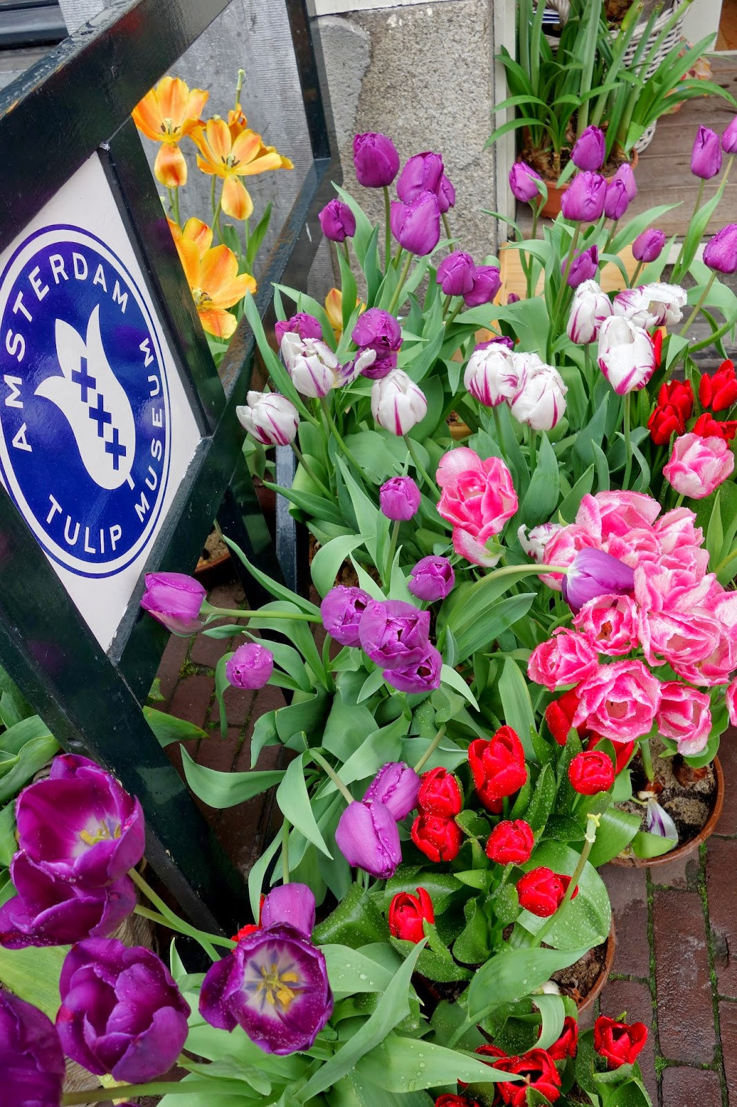 Tulip Museum, Amsterdam