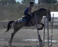 saut a cheval