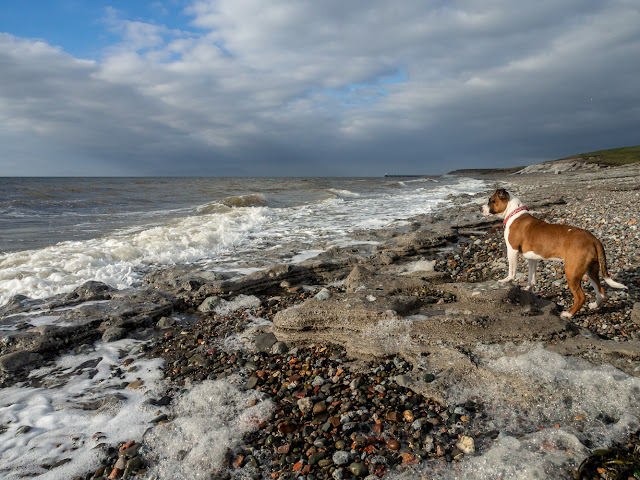 Photo of Ruby on the pebbles when the tide was in