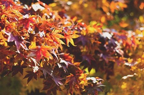 leren vragen stellen over de herfst