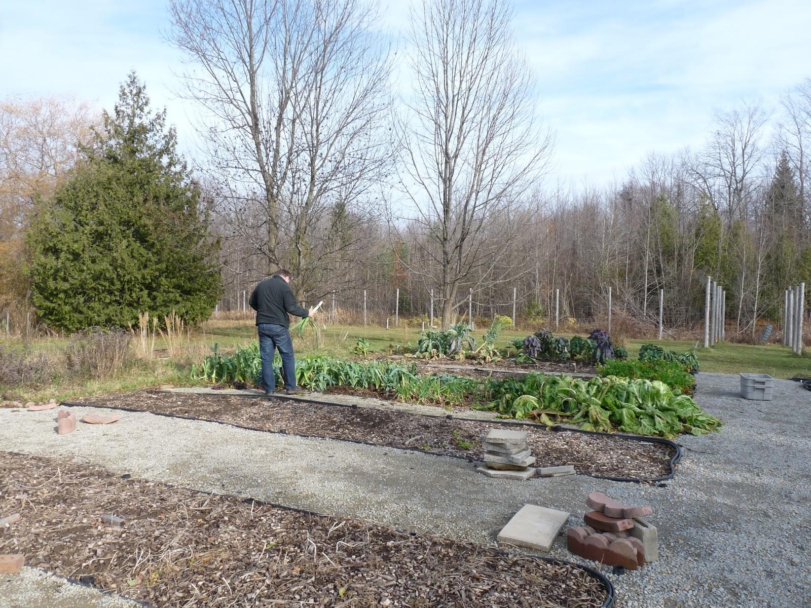 garden report Garden trend report and custom garden market research on gardening, flowers, patio furniture, plants, landscaping and garden trends.