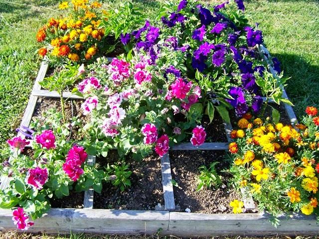 Square Foot Gardening Flowers Copyright Adrienne Z. Milligan