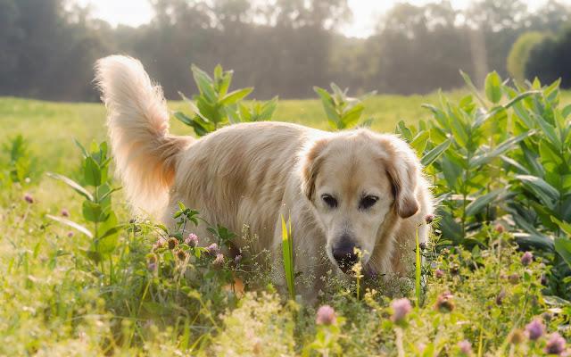 Hond tussen de planten