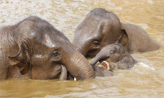 25 cute animals taking baths 25 pics amazing creatures