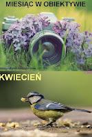http://misiowyzakatek.blogspot.com/2016/04/miesiac-w-obiektywie-kwiecien.html