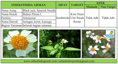 biopestisida anti serangga, insektisida nabati