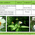 Biopestisida Anti Serangga/Insektisida Nabati dari Tanaman Ajeran