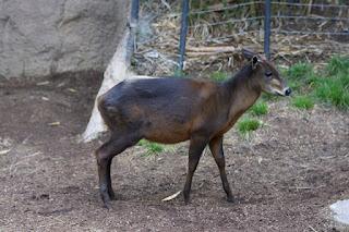 19 Fakta dan Informasi Menarik tentang Antelop