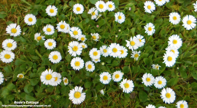Being blessed by our garden: I do adore daisies honeys...