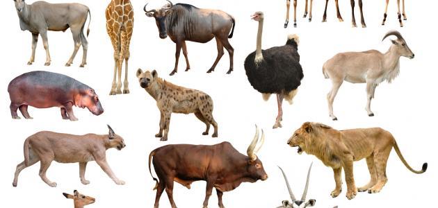 تصنيف الحيوانات إلى فقارية ولافقارية