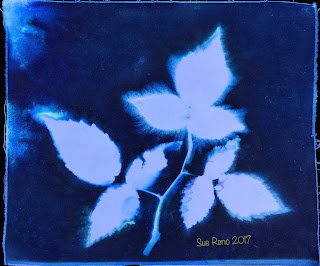 Wet cyanotype_Sue Reno_Image 225