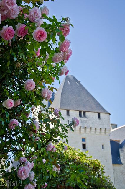 Castelul Rivau Valea Loarei Franta
