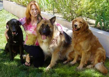 Goldens Retrievers German Shepherd And Golden Retriever