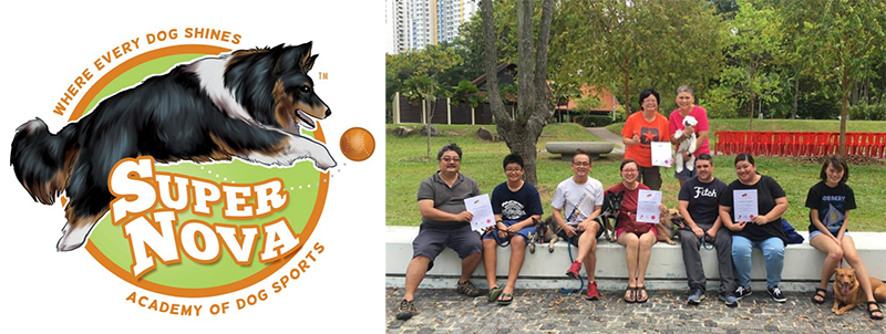 Dog training classes in Singapore