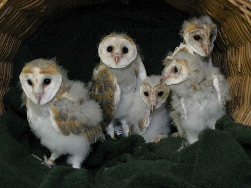 World Bird Sanctuary: February 2012