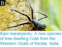 https://sciencythoughts.blogspot.com/2017/04/kani-maranjandu-new-species-of-tree.html