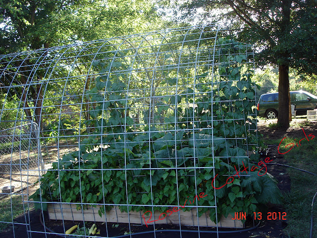 Raised Bed Garden, Horse fencing Trellis, easy garden, easy raised bed gardening, raised bed garden soil, by Rosevine Cottage Girls