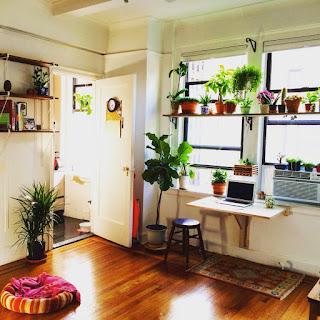 Mẫu ý tưởng thiết kế cây xanh trong góc phòng làm việc
