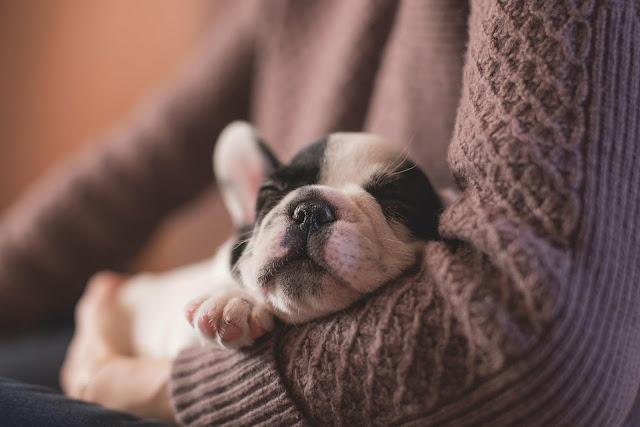 background cute dog