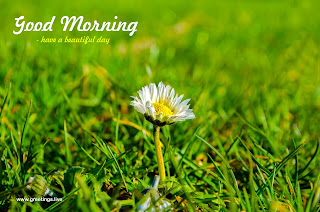 have a beautiful morning today... morning greetings with flowers