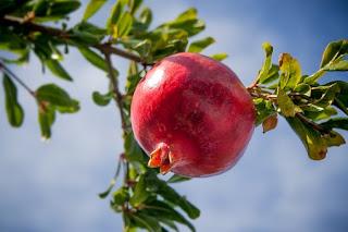 pomegranate-www.healthnote25.com