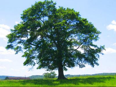 Dia Mundial da Árvore - 21 de Setembro
