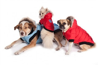 Dog Accessories Canada Get The Perfect Accessories For Your Dog