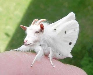 <alt img src='gambar.jpg' width='100' height='100' alt='goat- butterfly'/>