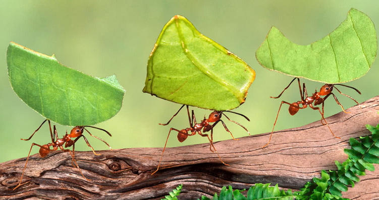what humans can learn from ants