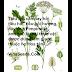 Hồi hương - Anise Herb Seeds (Pimpinella anisum)
