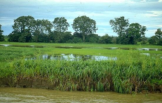 Pântanos, Ecossistemas de Terrenos Parcialmente Inundados