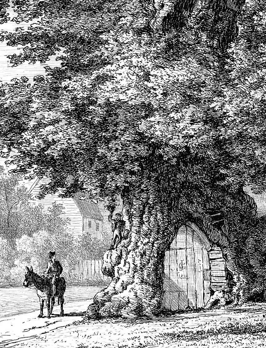 Jacob George Strutt 1824, a tree as a home