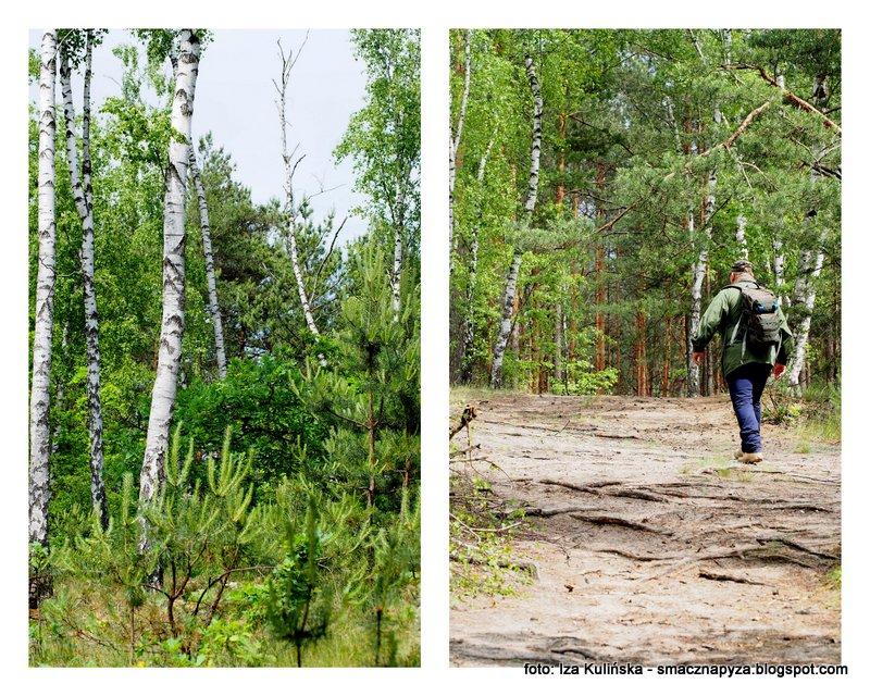 las w wawrze, wawer, wola grzybowska, wydmy, puszcza mazowiecka, pod warszawa, lasy miejskie, las mieszany