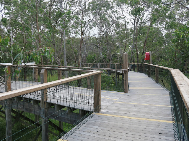 inside the koala boardwalk