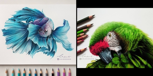 00-Chloe-O-Shea-Realistic-Wind-Animal-Drawings-www-designstack-co
