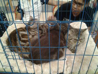 Cat show Batam