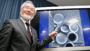 Ganador del Nobel por sus hallazgos sobre la autofagia (AFP).