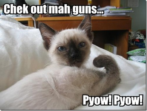 cute funny animals with sayings - photo #12