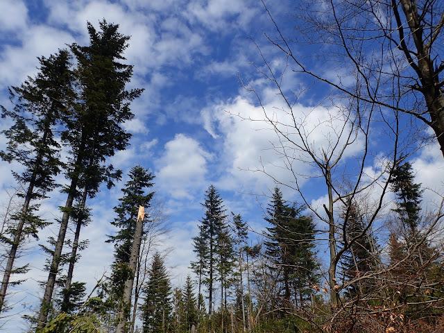 Lasy na Łopieniu