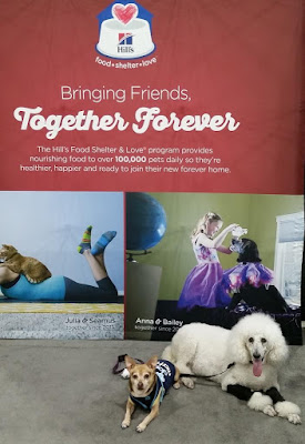 Carma Poodale and Scooby in front of Hills Pets Together Forever poster