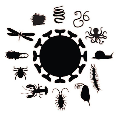 Pioneering study of invertebrates discovers 1,445 viruses including several new families