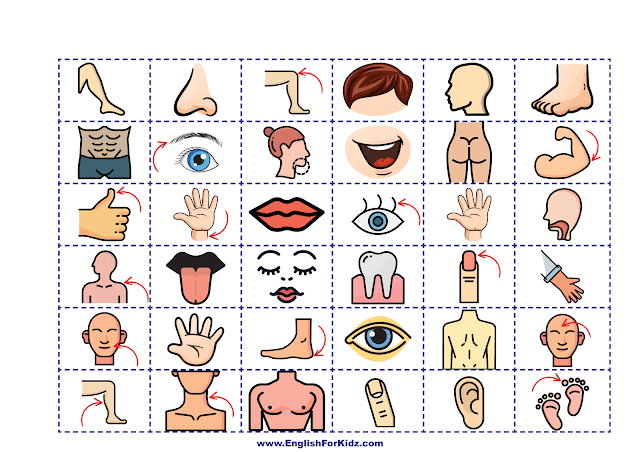 Body parts game - images cards - printable dice game for EFL and ESL students