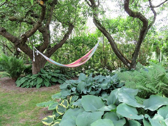 Hengekøye og Hosta - på trädgårdsrundan  IMG_5871 (2)-min